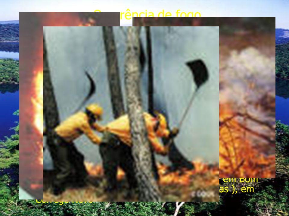 Ocorrência de fogo Antes da formação do parque vários incêndios dizimaram as florestas da área, sendo que na sua formação este era uma ilha isolada de vegetação Na década de 60 iniciaram-se as atividades de reflorestamento Em 1967 ocorreu o maior incêndio da história do parque, queimando 9000 há, e matando 11 combatentes Hoje em dia as áreas críticas em relação ao fogo são a região de Limoeiro ( 1500 pessoas ) e Macuco ( 500 pessoas) em Timóteo; Celeste ( 100 pessoas ), em Marliéria; Baixa Verde ( 3000 pessoas ), em Dionísio; Revés do Belém ( 1500 pessoas ), em Bom Jesus do Galho; Pingo dÁgua ( 3000 pessoas ), em Córrego Novo