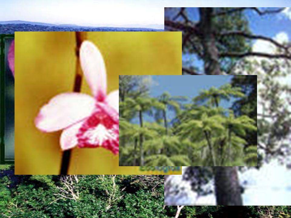 Jequitibá, palmito-doce, samambaioçus e outros - Floresta Estacional Semi-decidual – Mata Atlântica PERD – 1129 espécies pertencentes à 134 famílias Ameaçadas de extinção à nível estadual e nacional – Bilbergia leptopoda, Brosimun glaziovii, Cattleya labiata warneri, Dalbergia nigra, Dorstenia arifolia, Euterpe edulis, Guatteria odotopetala e rilosissima, Melanoxylon brauna, Ocotea odorifera e percoreacea, Persea rufutomentosa, Psychotria ipecacauenba, Solanum warminguii