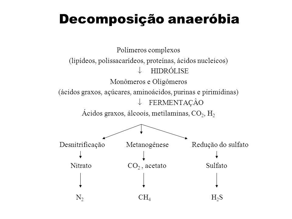 Polímeros complexos (lipídeos, polissacarídeos, proteínas, ácidos nucleicos) HIDRÓLISE Monômeros e Oligômeros (ácidos graxos, açúcares, aminoácidos, p