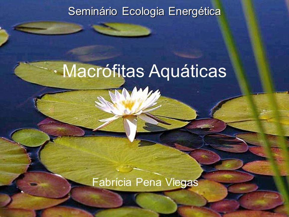 Seminário Ecologia Energética Seminário Ecologia Energética Macrófitas Aquáticas Fabrícia Pena Viegas