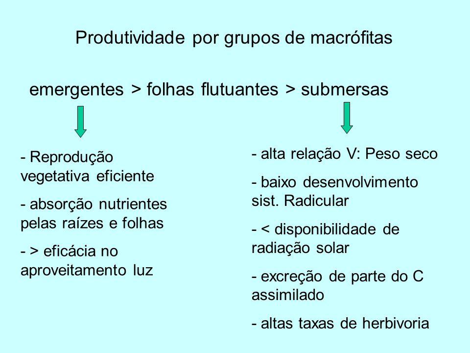 Produtividade por grupos de macrófitas emergentes > folhas flutuantes > submersas - Reprodução vegetativa eficiente - absorção nutrientes pelas raízes