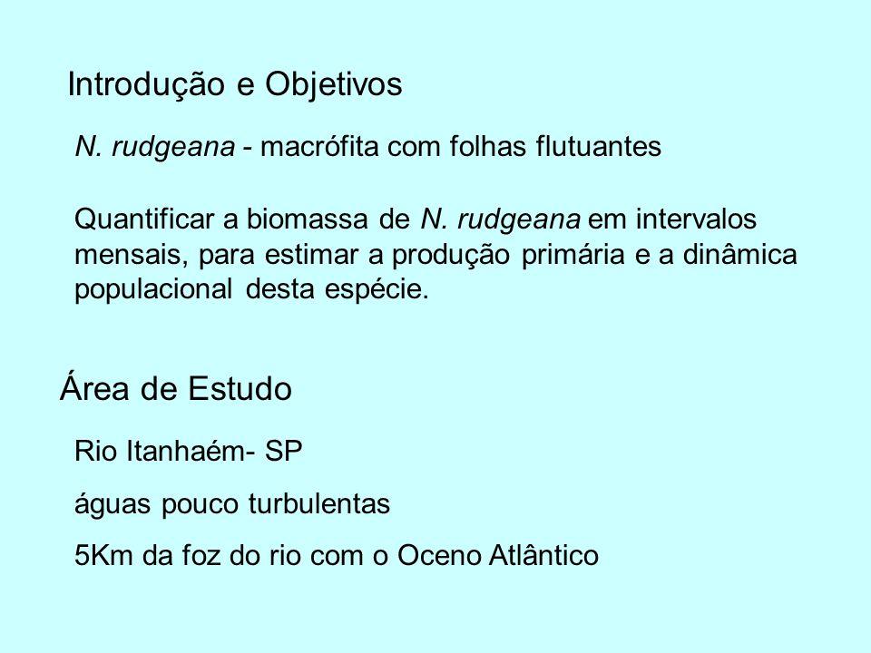 Introdução e Objetivos Quantificar a biomassa de N. rudgeana em intervalos mensais, para estimar a produção primária e a dinâmica populacional desta e