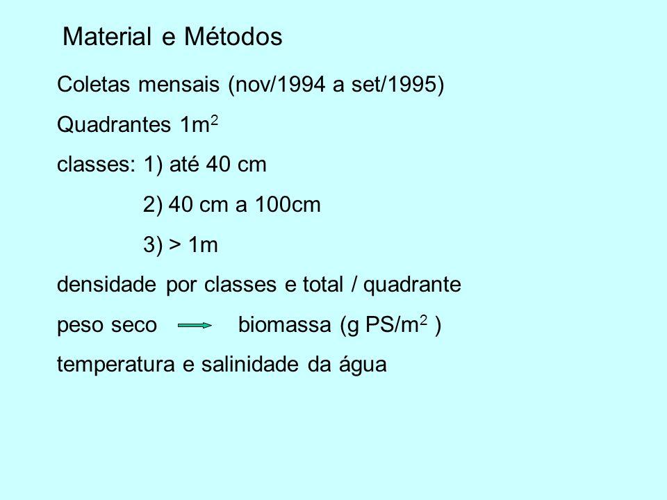 Material e Métodos Coletas mensais (nov/1994 a set/1995) Quadrantes 1m 2 classes: 1) até 40 cm 2) 40 cm a 100cm 3) > 1m densidade por classes e total