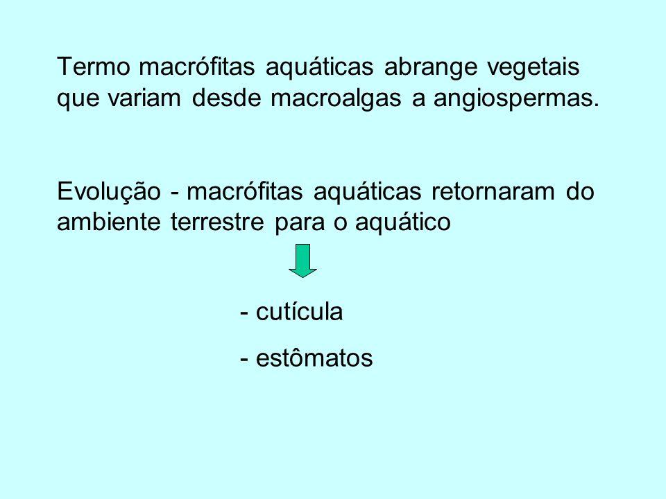Produtividade por grupos de macrófitas emergentes > folhas flutuantes > submersas - Reprodução vegetativa eficiente - absorção nutrientes pelas raízes e folhas - > eficácia no aproveitamento luz - alta relação V: Peso seco - baixo desenvolvimento sist.