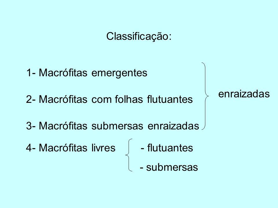 Classificação: 1- Macrófitas emergentes 2- Macrófitas com folhas flutuantes 3- Macrófitas submersas enraizadas 4- Macrófitas livres - flutuantes - sub