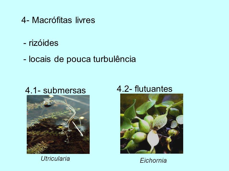 Perifíton Complexa comunidade microbiota ( algas, bactérias, fungos, animais) aderidos a um substrato