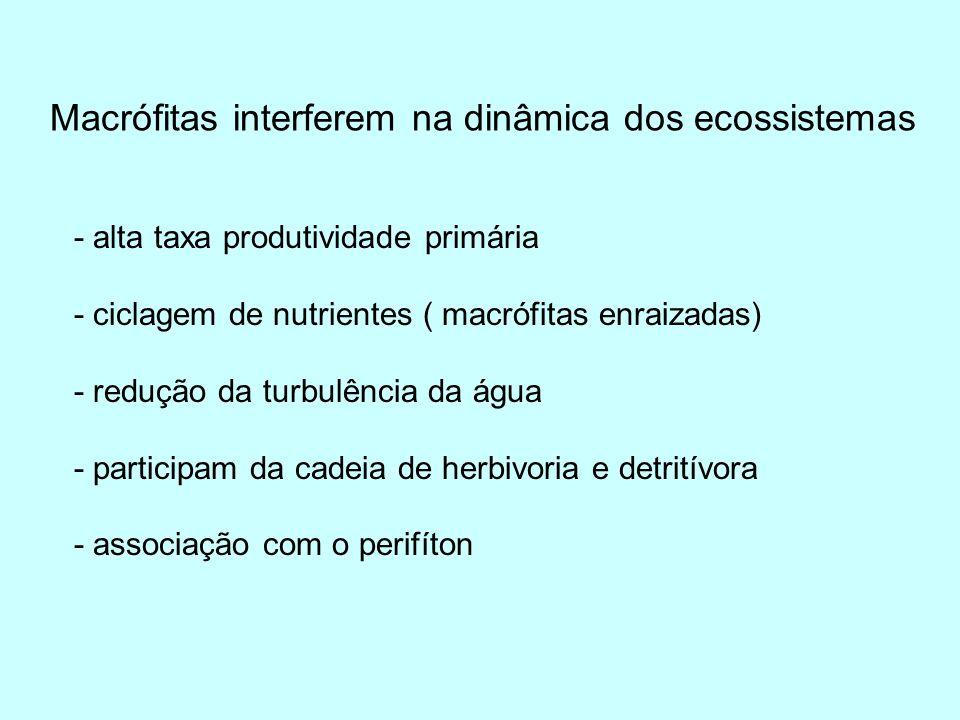 Bibliografia CAMARGO, A.F. M. e FLORENTINO, E. R.