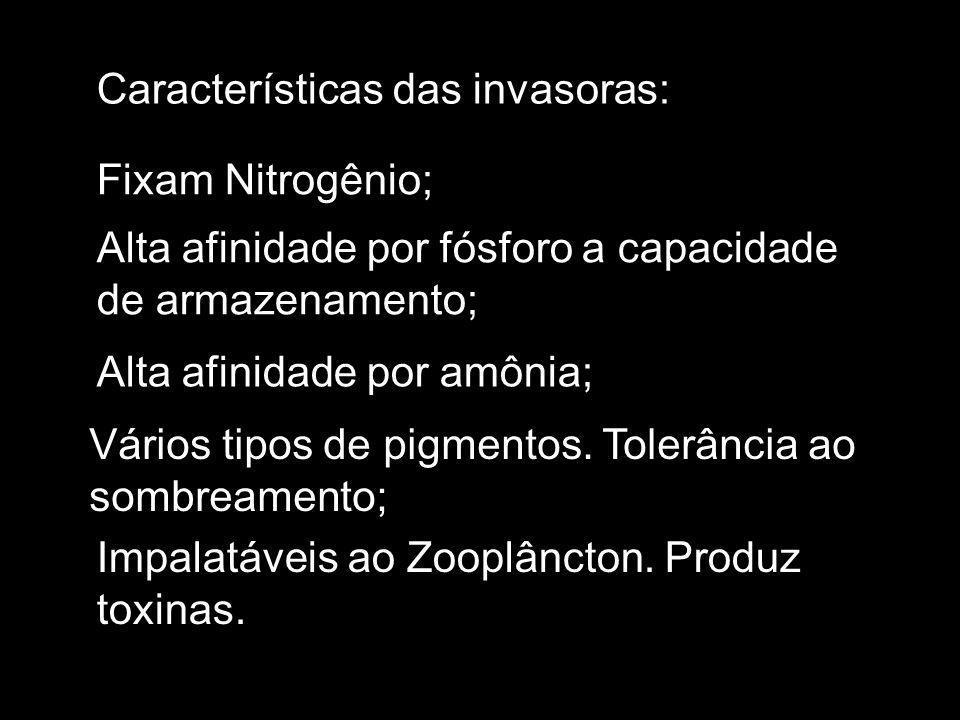 Características das invasoras: Fixam Nitrogênio; Alta afinidade por fósforo a capacidade de armazenamento; Alta afinidade por amônia; Vários tipos de pigmentos.