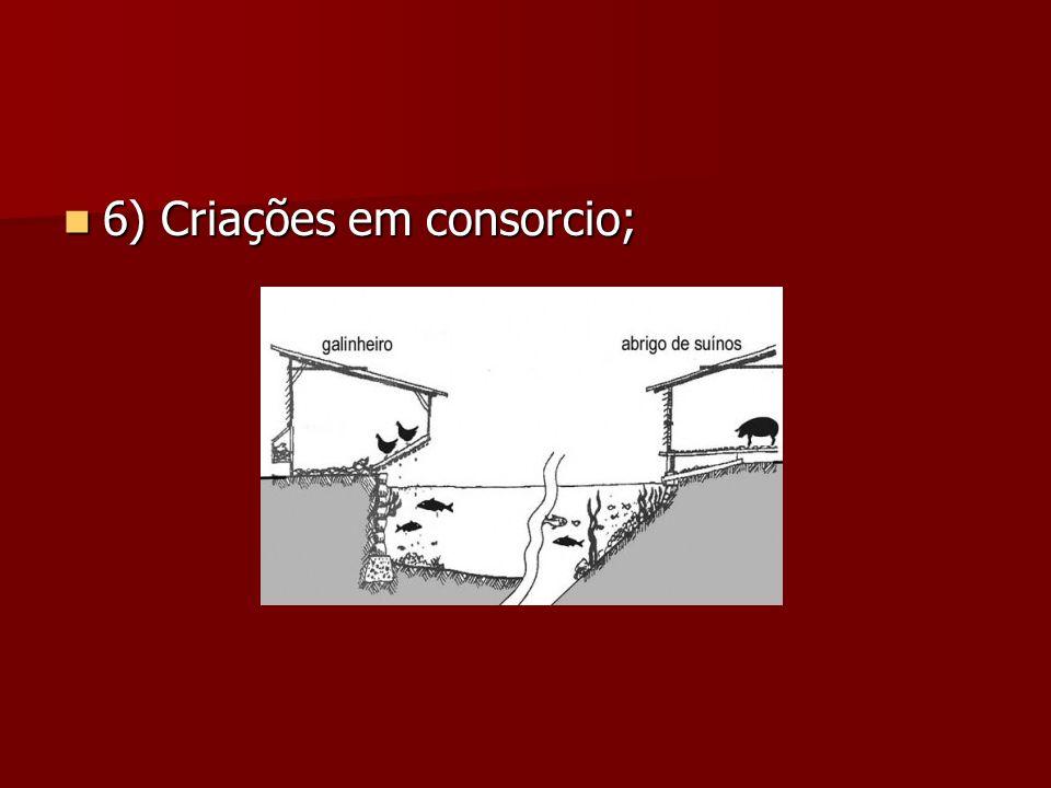 6) Criações em consorcio; 6) Criações em consorcio;