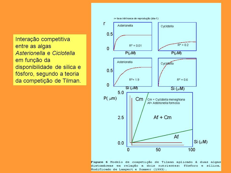 Interação competitiva entre as algas Asterionella e Ciclotella em função da disponibilidade de silica e fósforo, segundo a teoria da competição de Til