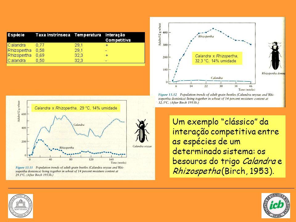 Um exemplo clássico da interação competitiva entre as espécies de um determinado sistema: os besouros do trigo Calandra e Rhizospetha (Birch, 1953). C