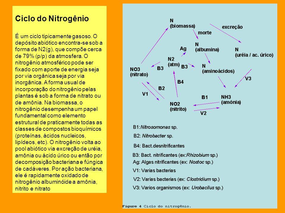 Ciclo do Nitrogênio É um ciclo tipicamente gasoso. O depósito abiótico encontra-se sob a forma de N2(g), que compõe cerca de 79% (p/p) da atmosfera. O