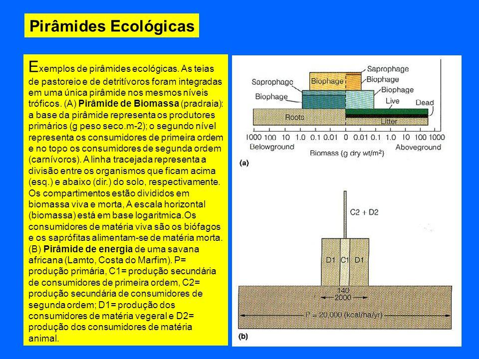 Pirâmides Ecológicas E xemplos de pirâmides ecológicas. As teias de pastoreio e de detritívoros foram integradas em uma única pirâmide nos mesmos níve