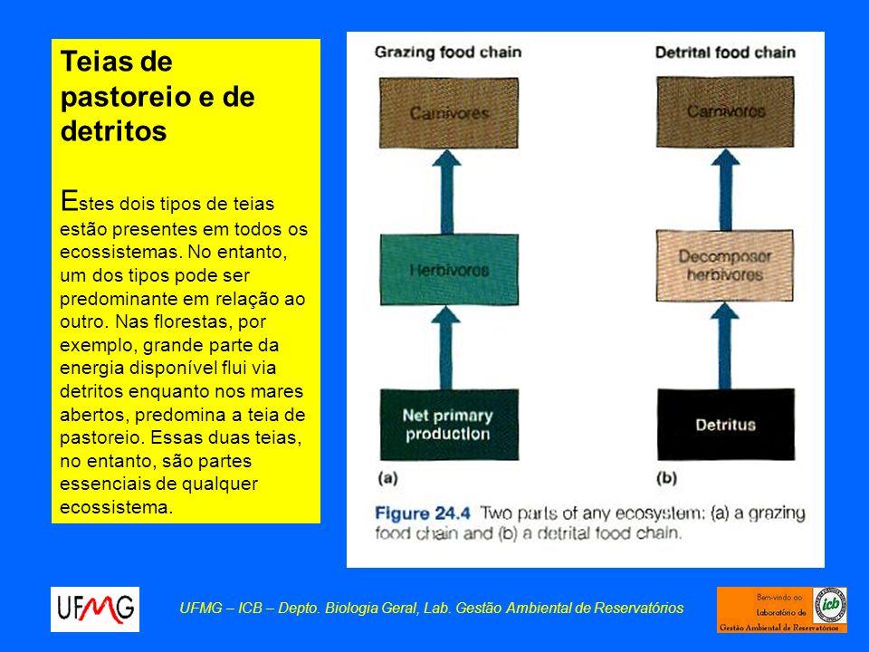 Complexidade das Teias Alimentares E xistem alguns problemas para representar certos tipos de interações tróficas: a) Variações na dieta básica.