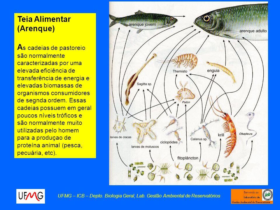 UFMG – ICB – Depto. Biologia Geral, Lab. Gestão Ambiental de Reservatórios Teia Alimentar (Arenque) A s cadeias de pastoreio são normalmente caracteri