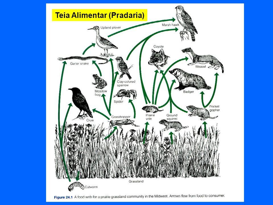 Cadeia (Teia) Alimentar dos Detritos Ausência de predominância de consumidores de tecido vegetal vivo, ou seja, de pastadores ou herbívoros (grazers ) especializados para consumir biomassa vegetal viva.