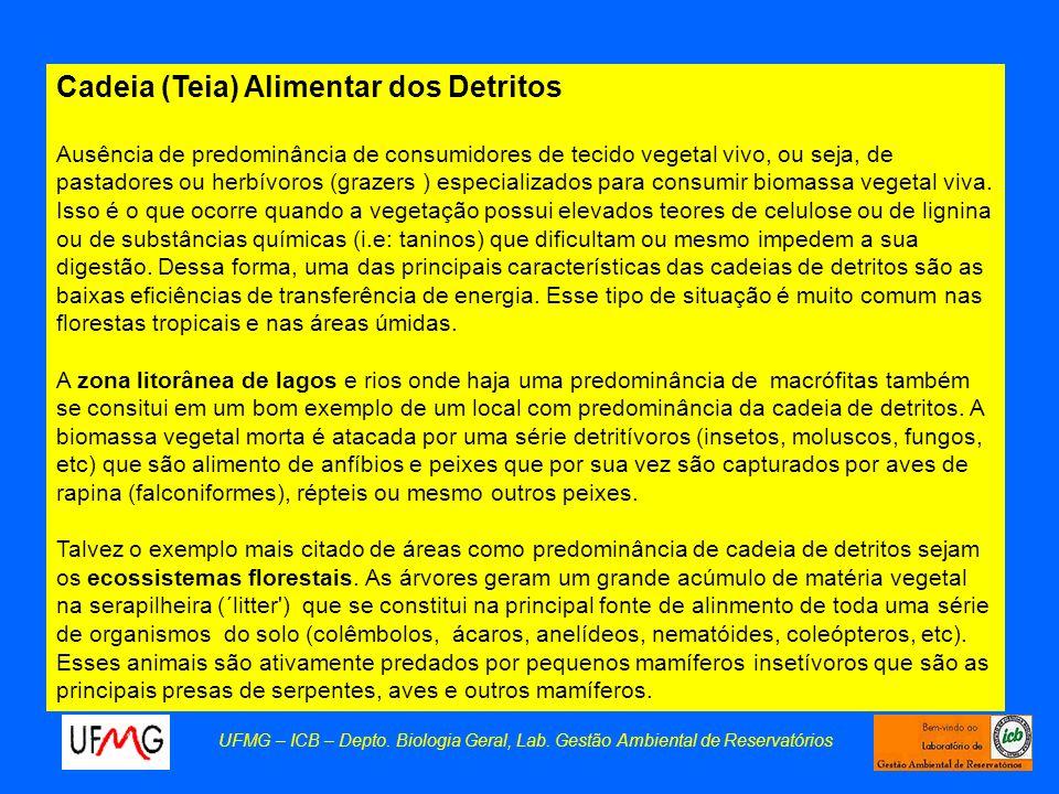 Cadeia (Teia) Alimentar dos Detritos Ausência de predominância de consumidores de tecido vegetal vivo, ou seja, de pastadores ou herbívoros (grazers )