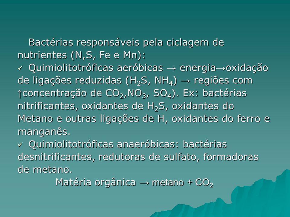 Bactérias responsáveis pela ciclagem de nutrientes (N,S, Fe e Mn): Quimiolitotróficas aeróbicas energia oxidação Quimiolitotróficas aeróbicas energia