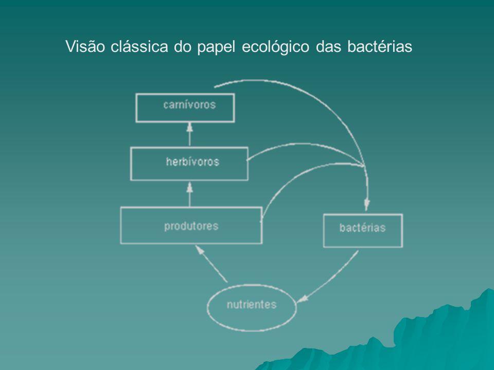 Visão clássica do papel ecológico das bactérias