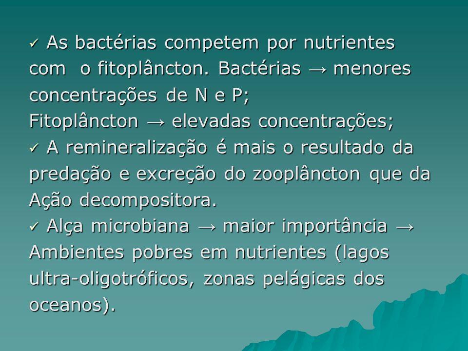 As bactérias competem por nutrientes As bactérias competem por nutrientes com o fitoplâncton. Bactérias menores concentrações de N e P; Fitoplâncton e