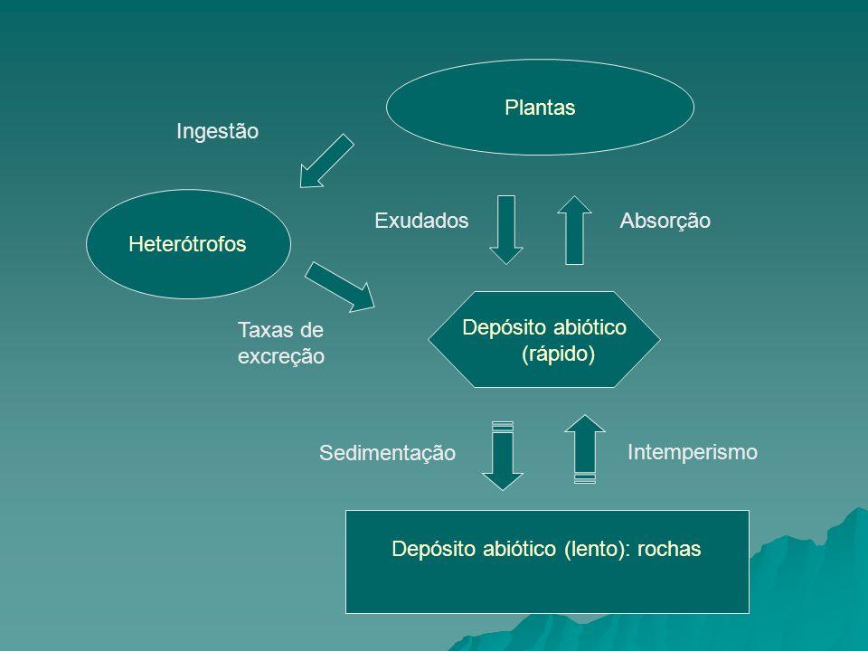 Plantas Heterótrofos Depósito abiótico (lento): rochas Depósito abiótico (rápido) Intemperismo Sedimentação ExudadosAbsorção Taxas de excreção Ingestã