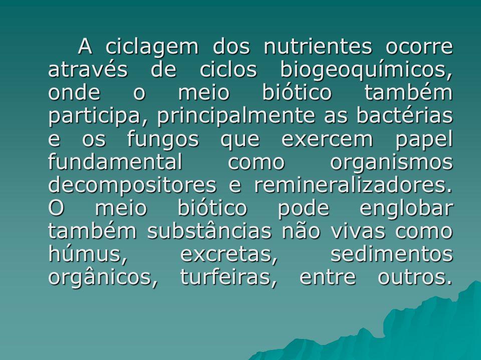 A ciclagem dos nutrientes ocorre através de ciclos biogeoquímicos, onde o meio biótico também participa, principalmente as bactérias e os fungos que e