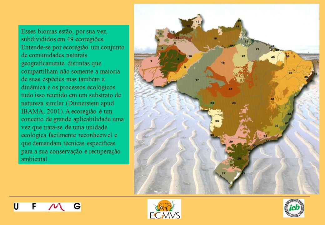 1- Sudoeste da Amazônia26 – Chaco úmido 2- Várzeas de Iquitos27 – Campos Sulinos 3- Florestas de Caquetá28 – Florestas de Araucária 4- Campinaranas do Alto Rio Negro29 – Florestas rios bacia do Paraná superior 5- Interflúvio Japurá, Solimões, Negro30 – Florestas da Serra do Mar 6 – Interflúvio Japurá-Solimões31 – Campos rupestres I (Mantiqueira) 7- Várzea do Purus32 – Florestas dos rios atlânticos e da Bahia 8 – Interflúvio Juruá-Purús33 – Florestas de Minas (Zona da Mata) 9- Interflúvio Purus-Madeira34 – Florestas costeiras de Pernambuco (Mata) 10-35 – Agreste 11- Interflúvio Negro-Branco36 – Brejos nordestinos 12 – Savanas das Guianas37 – Caatinga 13- Florestas de Altitude das Guinanas38 - Manguezais do Amapá 14 – Florestas das Guianas39 – Manguezias do Pará 15- Tepuis40 – Área litorânea Maranhão-Piauí 16- Interflúvio Uamatá-Trombetas41 –Mangeuzais da Bahia 17- Interflúvio Madeira-Tapajós42 – Manguezais do Maranhão 18- Interflúvio Tapajós-Xingú43 – Restingas e áreas lagunares do sul 19- Várzea do Gurupá44 – Manguezais do sudeste 20- Interflúvio Xingu-Tocantins-Araguaia45 – Manguezais do Rio Piranha 21- Várzeas de Marajó46 – Foz do Rio São Francisco 22- Transição – Ecótono do Maranhão47 – Florestas secas de Mato Grosso 23- Florestas secas de Chiquitano48 – Campos Rupestres II (Espinhaço) 24- Cerrado49 – Florestas de Babaçu (Maranhão) 25- Pantanal A tabela, a seguir, fornece a lista das principais ecorregiões brasileiras (modificado de Ibama, 2001).