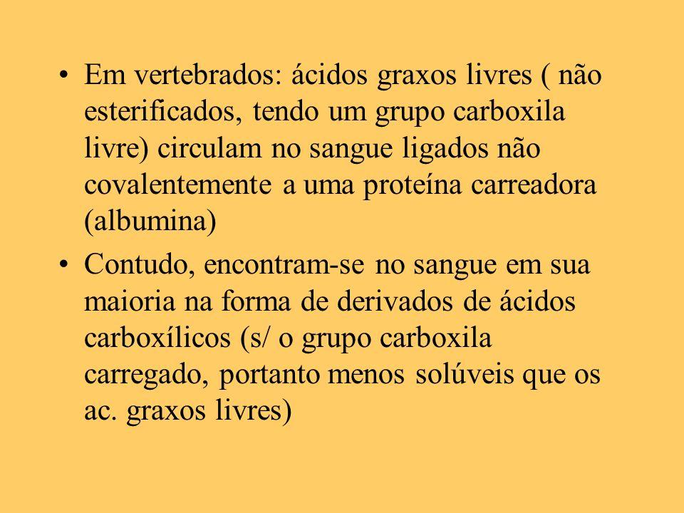 Em vertebrados: ácidos graxos livres ( não esterificados, tendo um grupo carboxila livre) circulam no sangue ligados não covalentemente a uma proteína