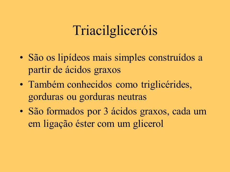 Triacilgliceróis São os lipídeos mais simples construídos a partir de ácidos graxos Também conhecidos como triglicérides, gorduras ou gorduras neutras