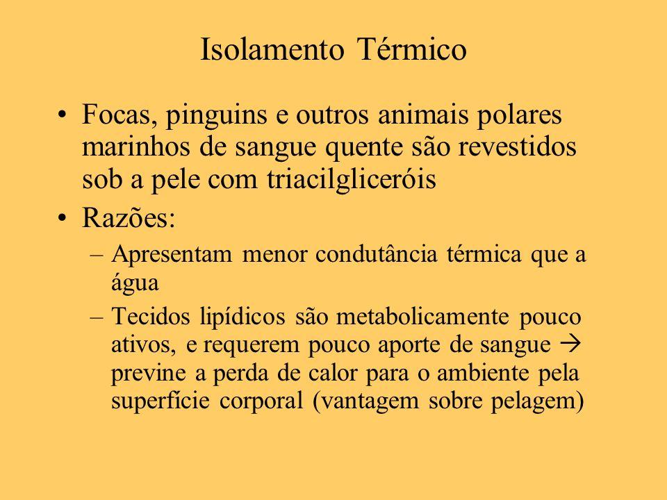 Isolamento Térmico Focas, pinguins e outros animais polares marinhos de sangue quente são revestidos sob a pele com triacilgliceróis Razões: –Apresent