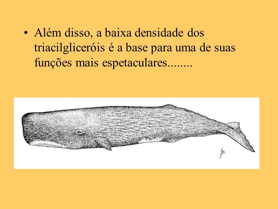 Além disso, a baixa densidade dos triacilgliceróis é a base para uma de suas funções mais espetaculares........