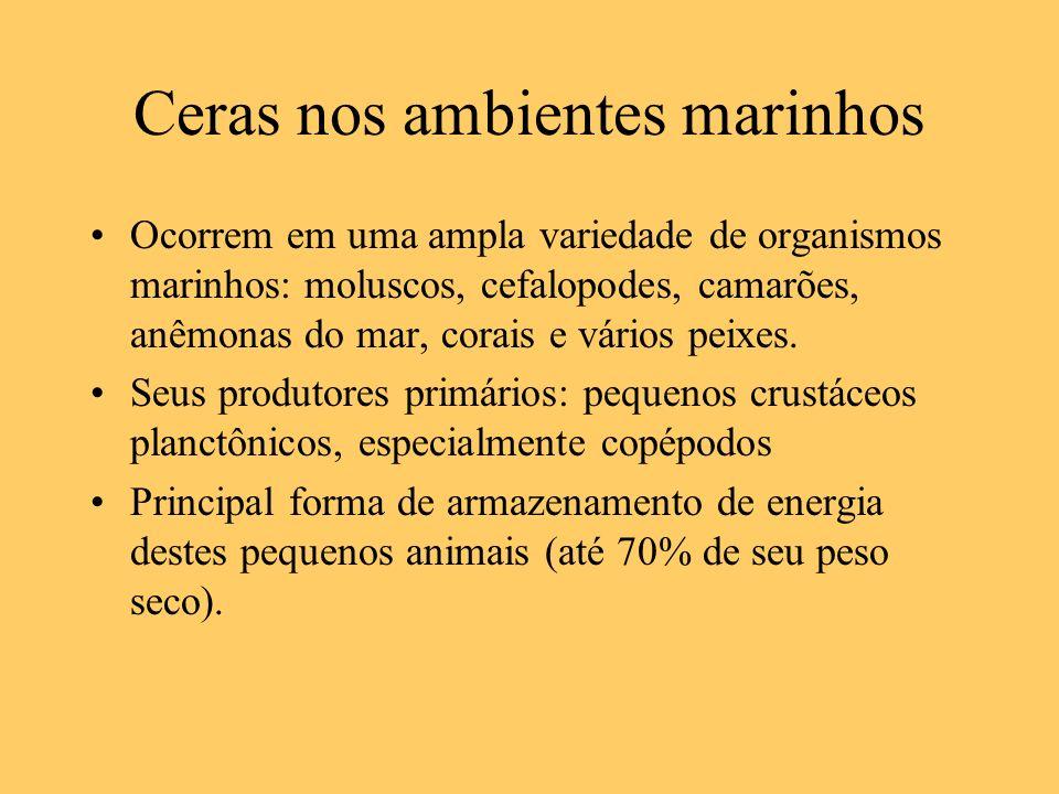 Ceras nos ambientes marinhos Ocorrem em uma ampla variedade de organismos marinhos: moluscos, cefalopodes, camarões, anêmonas do mar, corais e vários