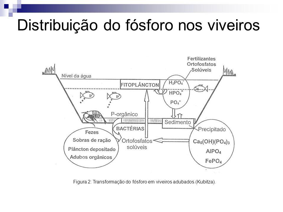 Distribuição do fósforo nos viveiros Figura 2: Transformação do fósforo em viveiros adubados.(Kubitza).