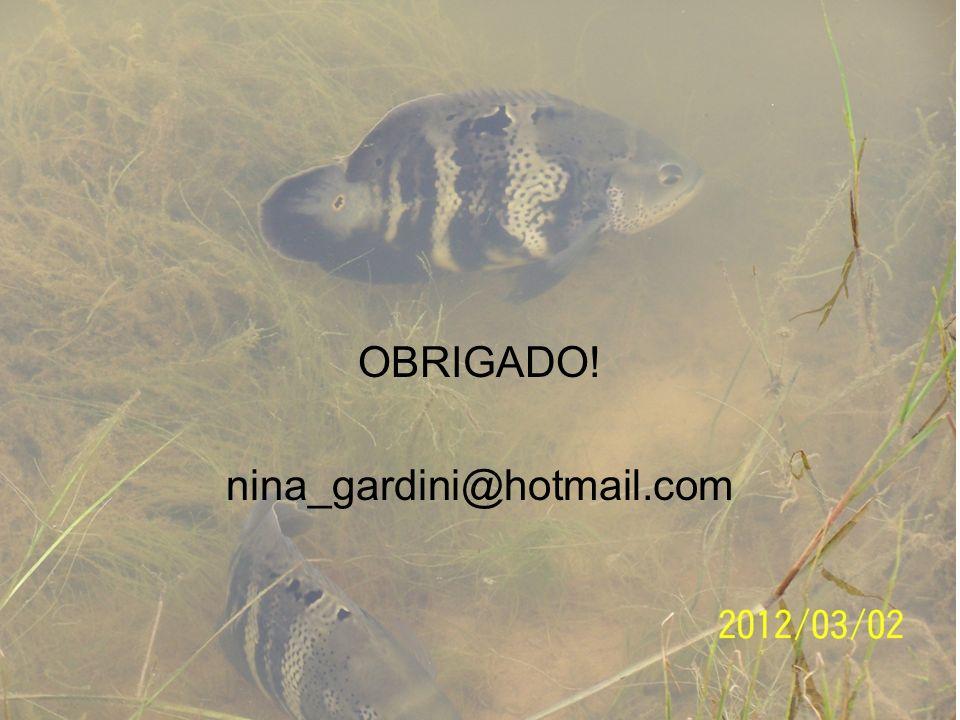 OBRIGADO! nina_gardini@hotmail.com