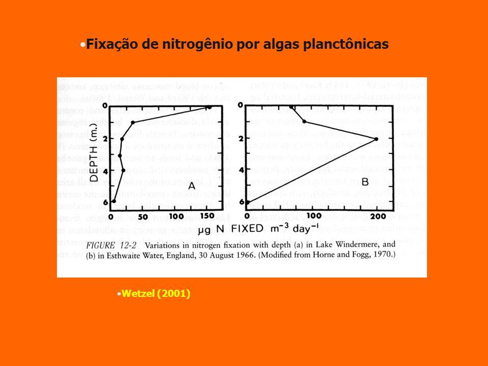 Fixação de nitrogênio por algas planctônicas Wetzel (2001)