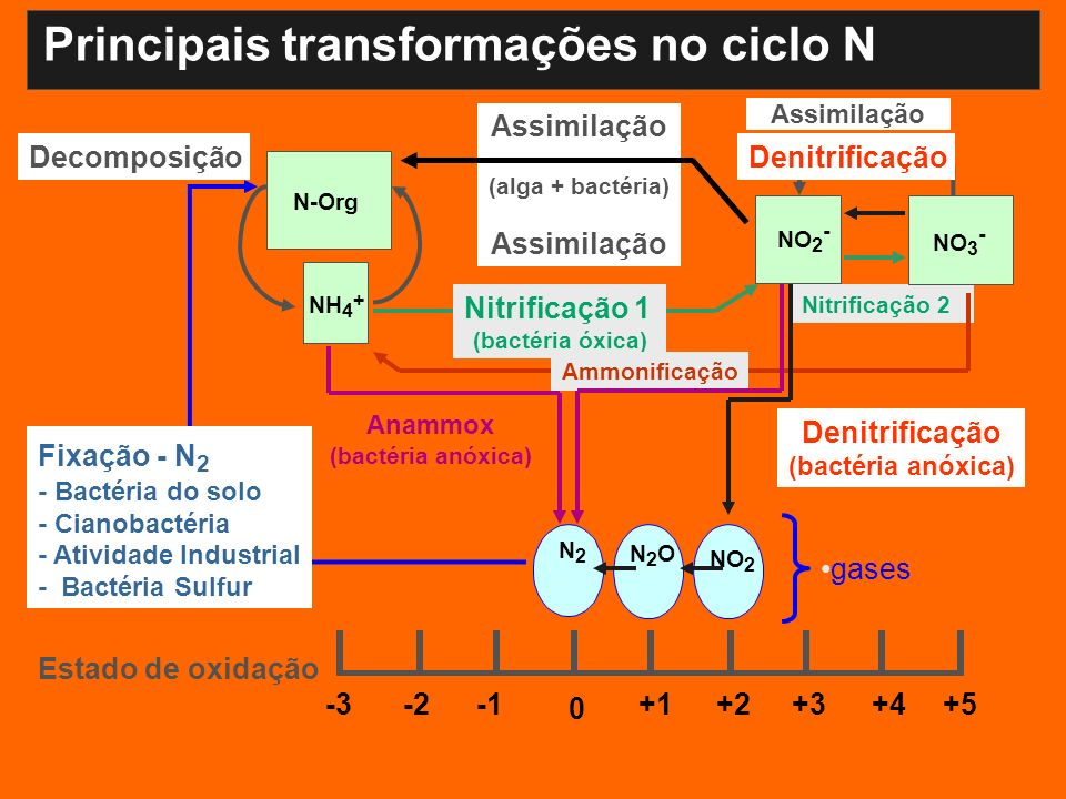 Assimilação (alga + bactéria) Assimilação -3+5+4+3+2+1 0 -2 Estado de oxidação Assimilação Denitrificação NO 2 N2ON2O N2N2 NH 4 + NO 2 - Decomposição