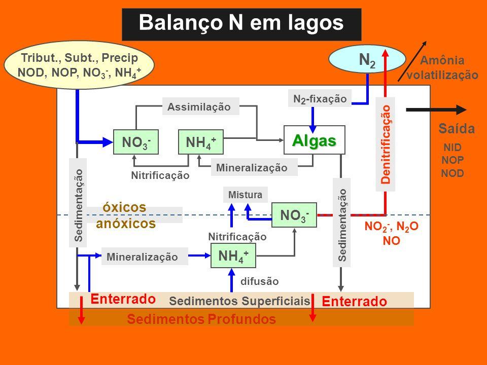 Sedimentos Superficiais N2N2 Algas óxicos anóxicos NO 3 - NH 4 + Nitrificação Assimilação Mineralização NH 4 + Nitrificação NO 2 -, N 2 O NO Denitrifi