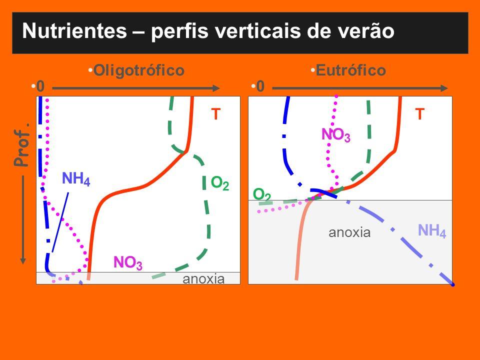 Nutrientes – perfis verticais de verão OligotróficoEutrófico TT O2O2 O 2 NO 3 NH 4 Prof. 00 anoxia