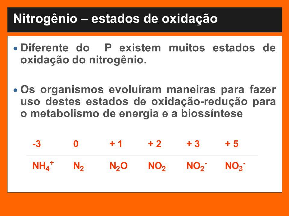 Nitrogênio – estados de oxidação Diferente do P existem muitos estados de oxidação do nitrogênio. Os organismos evoluíram maneiras para fazer uso dest