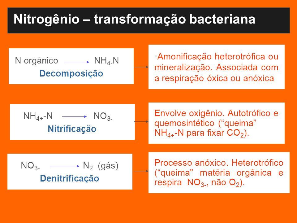NH 4+ -N NO 3- Nitrificação Nitrogênio – transformação bacteriana N orgânico NH 4- N Decomposição Amonificação heterotrófica ou mineralização. Associa