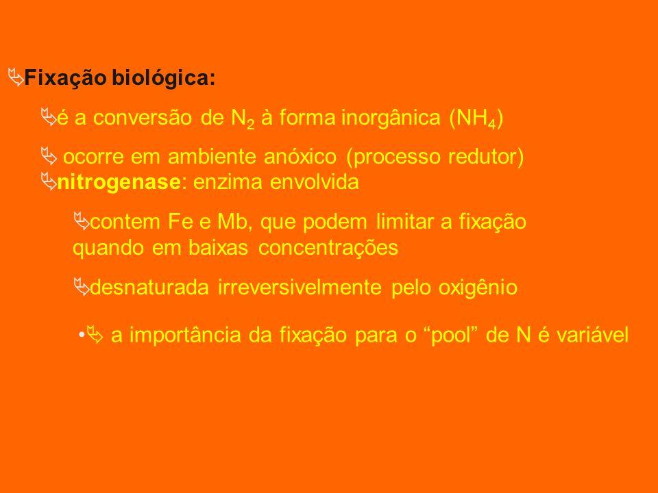 Fixação biológica: é a conversão de N 2 à forma inorgânica (NH 4 ) ocorre em ambiente anóxico (processo redutor) nitrogenase: enzima envolvida contem