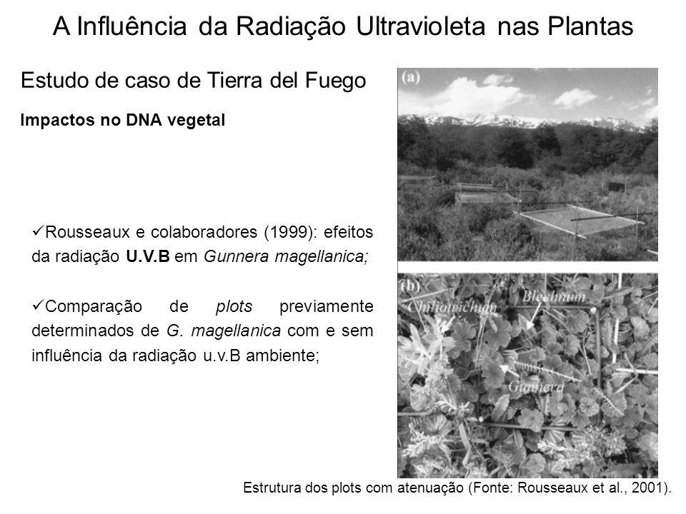 A Influência da Radiação Ultravioleta nas Plantas Estudo de caso de Tierra del Fuego Impactos no DNA vegetal Rousseaux e colaboradores (1999): efeitos