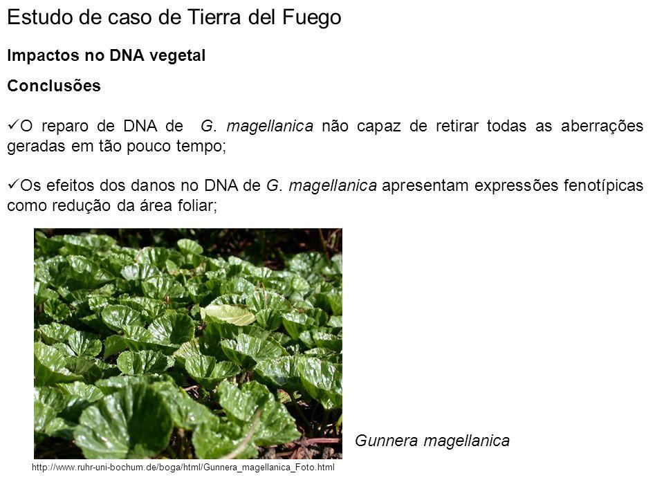 Estudo de caso de Tierra del Fuego Impactos no DNA vegetal Conclusões O reparo de DNA de G. magellanica não capaz de retirar todas as aberrações gerad