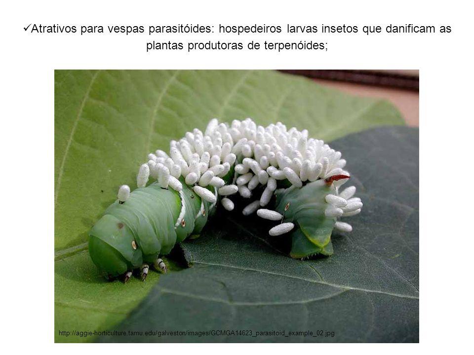 Atrativos para vespas parasitóides: hospedeiros larvas insetos que danificam as plantas produtoras de terpenóides; http://aggie-horticulture.tamu.edu/