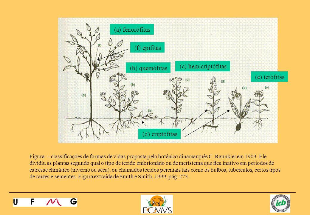 Figura – classificações de formas de vidas proposta pelo botânico dinamarquês C. Raunkier em 1903. Ele dividiu as plantas segundo qual o tipo de tecid