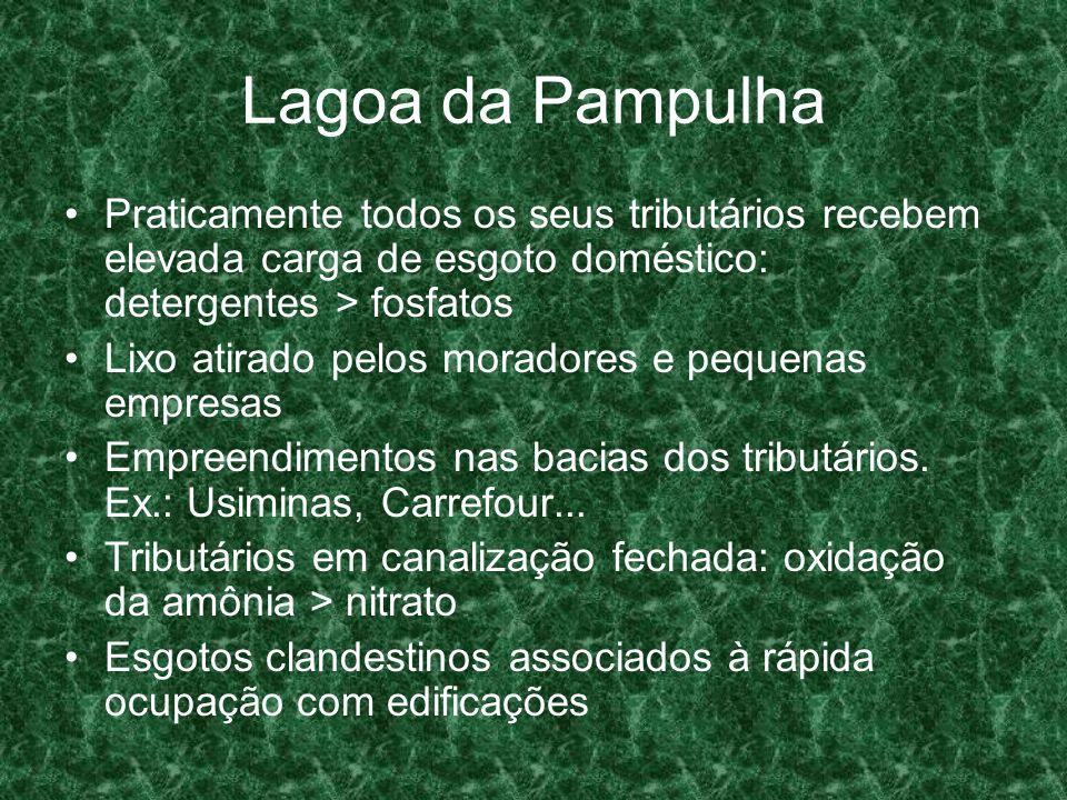 Lagoa da Pampulha Praticamente todos os seus tributários recebem elevada carga de esgoto doméstico: detergentes > fosfatos Lixo atirado pelos moradore