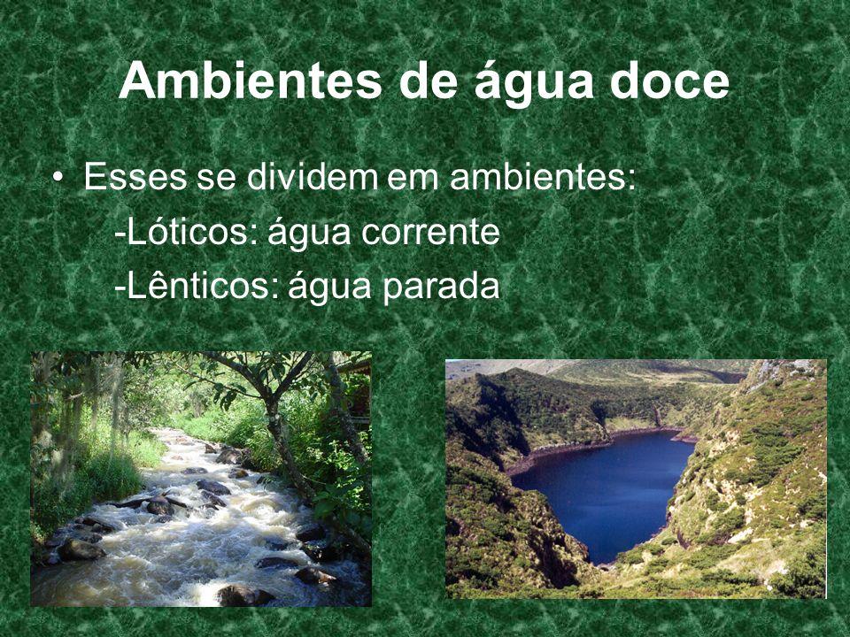 Ambientes de água doce Esses se dividem em ambientes: -Lóticos: água corrente -Lênticos: água parada