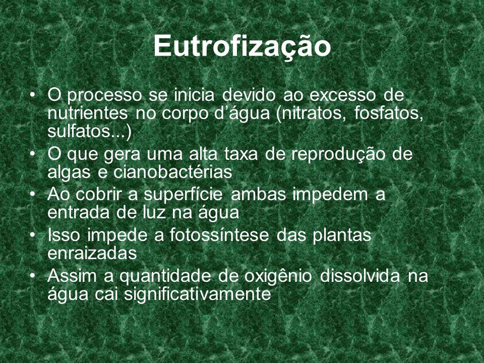 Eutrofização O processo se inicia devido ao excesso de nutrientes no corpo dágua (nitratos, fosfatos, sulfatos...) O que gera uma alta taxa de reprodu