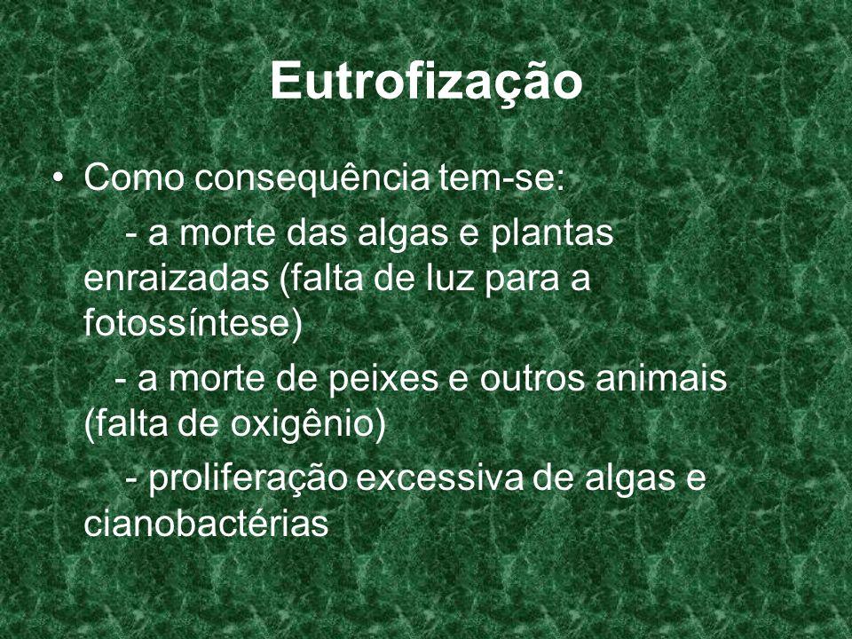 Eutrofização Como consequência tem-se: - a morte das algas e plantas enraizadas (falta de luz para a fotossíntese) - a morte de peixes e outros animai