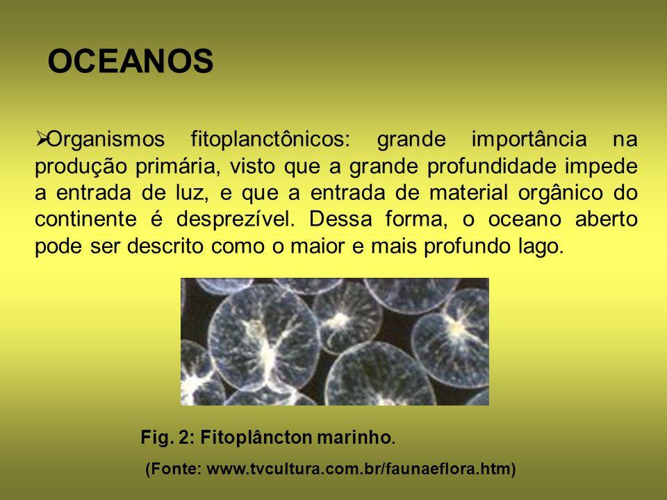 OCEANOS Organismos fitoplanctônicos: grande importância na produção primária, visto que a grande profundidade impede a entrada de luz, e que a entrada
